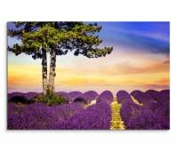120x80cm Wandbild Provence Lavendelfeld Baum Sommer