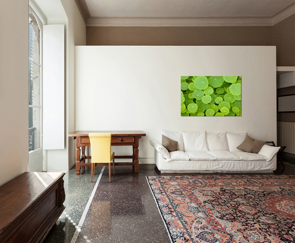 120x80cm Pflanzen Blätter Nahaufnahme grün