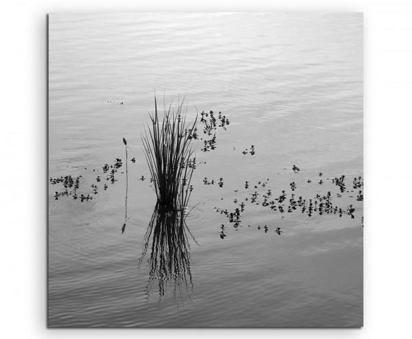 Naturfotografie – Schilf im Wasser auf Leinwand