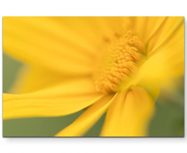 Gelbe Blüte im Frühling - Leinwandbild