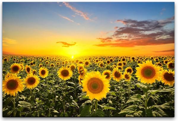 Sonnenblumenfeld Wandbild in verschiedenen Größen