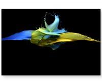 Farbensplash – blau und gelb gemischt - Leinwandbild