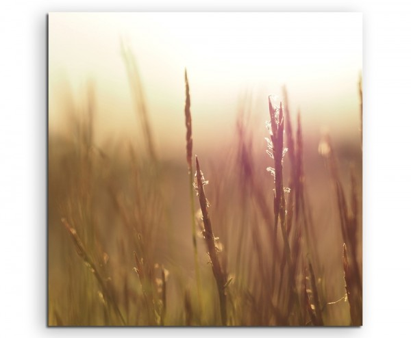 Naturfotografie – Grashalme im Wind auf Leinwand
