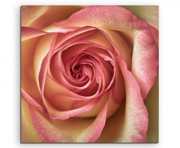 Naturfotografie – Rosa gelbe Rose auf Leinwand