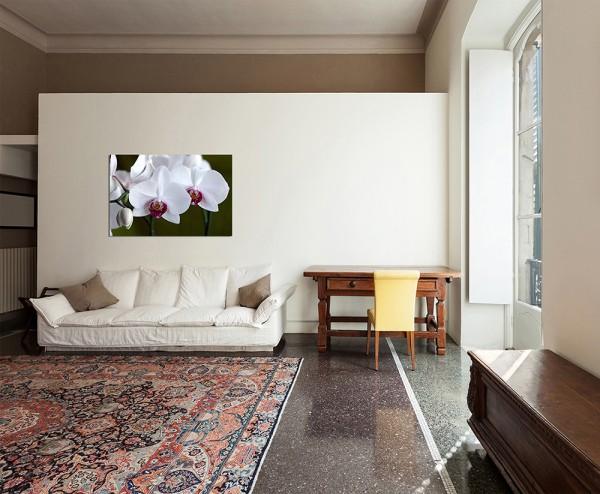 120x80cm Orchidee Blüte Blume weiß