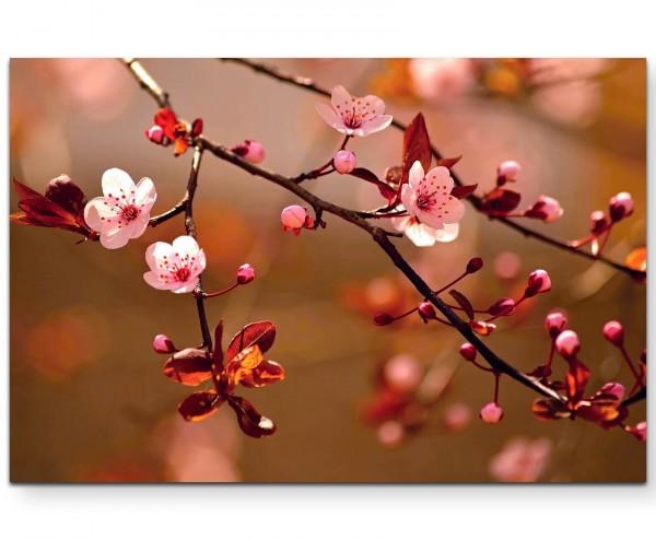 Naturfotografie – japanische Kirschblüten - Leinwandbild