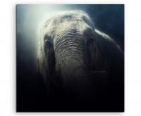 Tierfotografie – Elefant im Nebel auf Leinwand