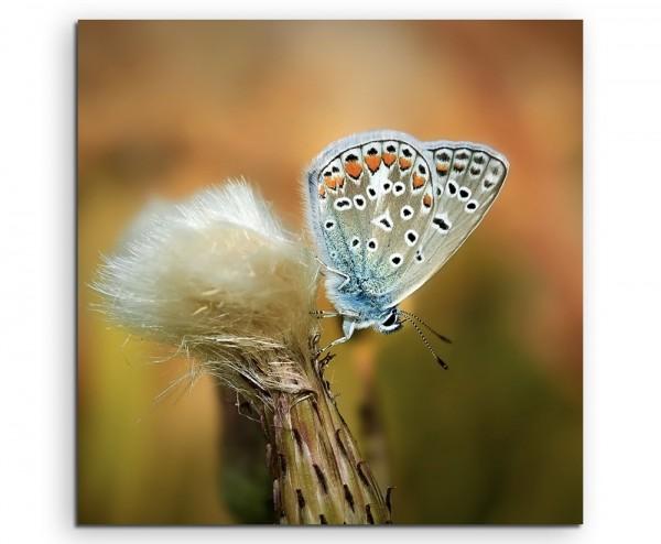 Naturfotografie – Blauer Schmetterling auf Löwenzahn auf Leinwand exklusives Wandbild moderne Fotogr