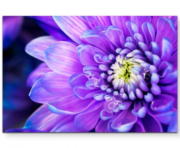 Wunderschöne lila farbene Blüte - Leinwandbild