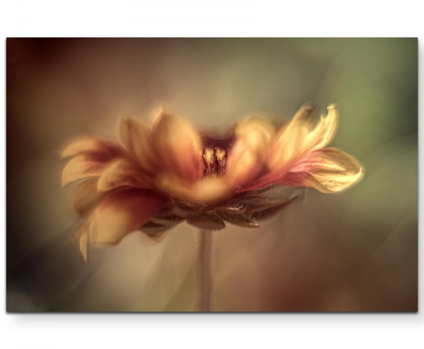 Abstrakte Blüte – Sommerabend - Leinwandbild