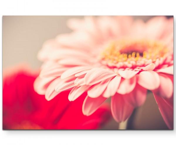 Vintage – Gerbera in rosa - Leinwandbild