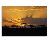 120x80cm Wandbild Afrika Akazien Bäume Sonnenuntergang