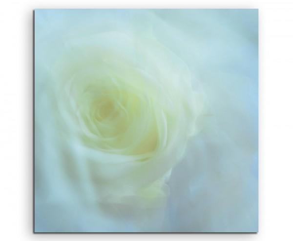 Naturfotografie – Weiße Rose auf Leinwand