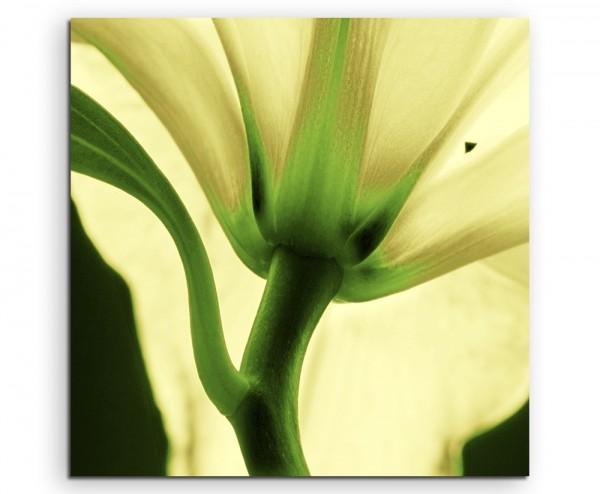 Naturfotografie – Pastellgelbe Lilie auf Leinwand