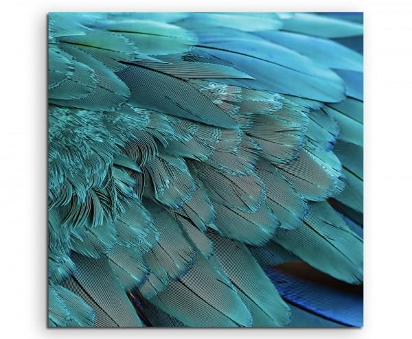 Naturfotografie – Flügel eines türkisen Aras auf Leinwand