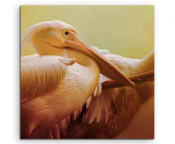 Tierfotografie – Portrait zweier Pelikane auf Leinwand exklusives Wandbild moderne Fotografie für ih