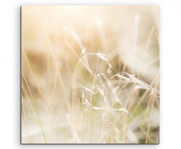 Naturfotografie – Grashalme in der Sonne auf Leinwand exklusives Wandbild moderne Fotografie für ihr