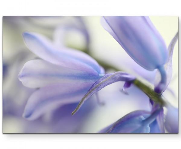 Hellblau-violette Blüte, soft - Leinwandbild