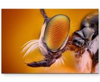 Makroaufnahme – Fliegenkopf im Profil - Leinwandbild