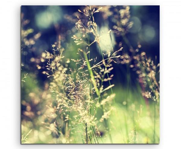 Naturfotografie – Waldwiese mit Wildgras auf Leinwand