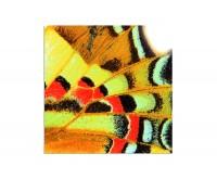 80x80cm Schmetterlingsflügel Hintergrund makro