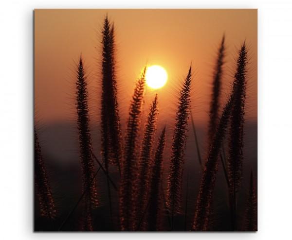Naturfotografie – Grashalme bei Sonnenaufgang auf Leinwand