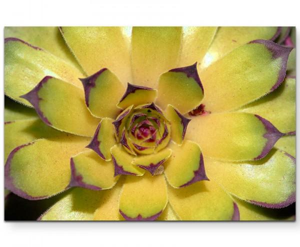 Naturfotografie – Kaktus von oben - Leinwandbild