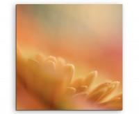 Naturfotografie – Orange Blütenblätter Sonnenblumen auf Leinwand exklusives Wandbild moderne Fotogra
