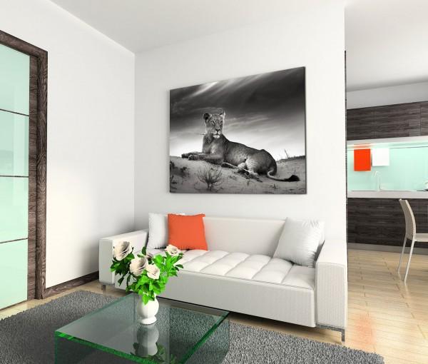 120x80cm Wandbild Löwin Wüste Sanddüne
