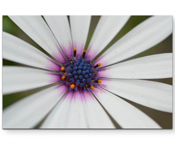 weiße Blüte, Nahaufnahme - Leinwandbild