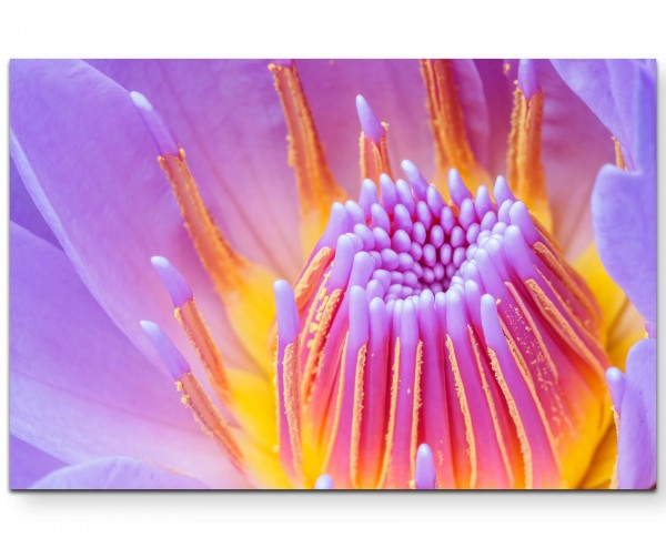 Fotografie einer wunderschönen lila Blüte - Leinwandbild