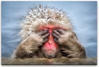 Affe versteckt sich Wandbild in verschiedenen Größen