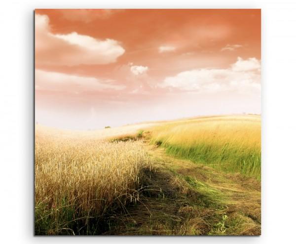 Naturfotografie – Weizenfeld und Grasfeld auf Leinwand
