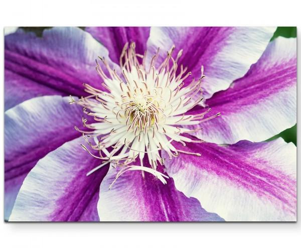 Blüte in Weiß und Violett - Leinwandbild