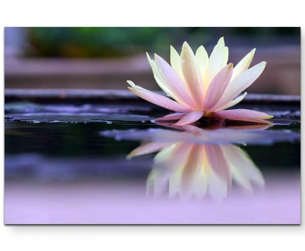 Fotografie – Lotusblüte mit Wasserspiegelung - Leinwandbild
