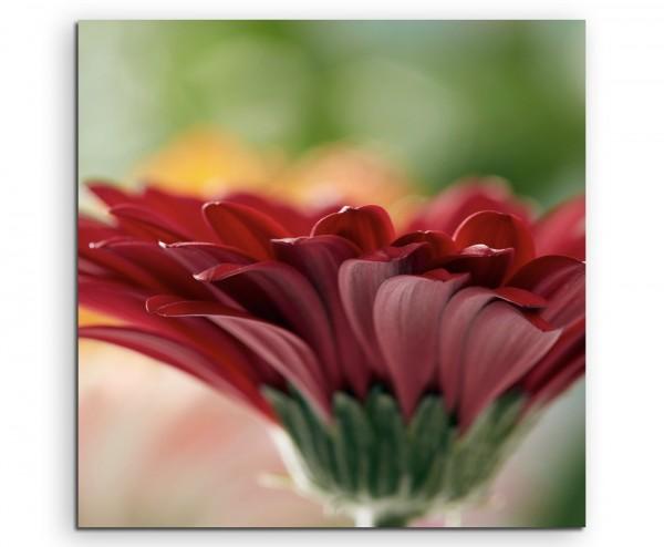 Naturfotografie – Rote blumen mit orangem Hintergrund auf Leinwand