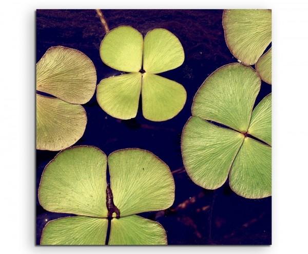 Naturfotografie – Kleeblätter von oben auf Leinwand