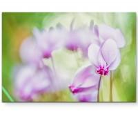 Rosa Alpenveilchen – Sommerwiese - Leinwandbild