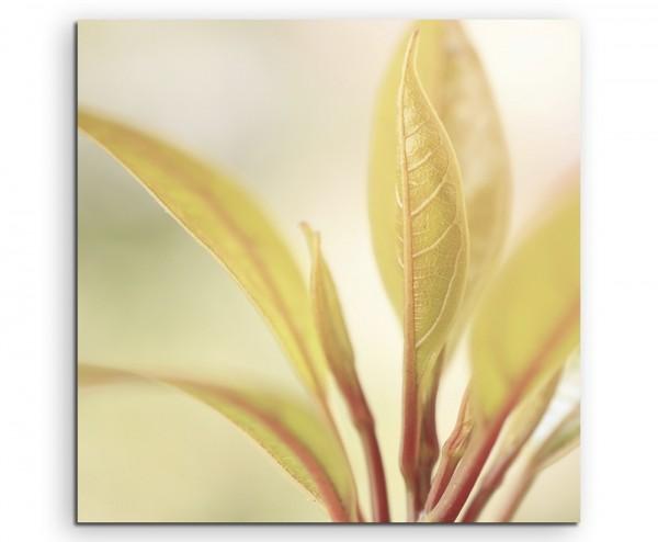 Naturfotografie – Zarte Blätter auf Leinwand