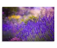 120x80cm Wandbild Lavendel Wiese Blumen Sommer