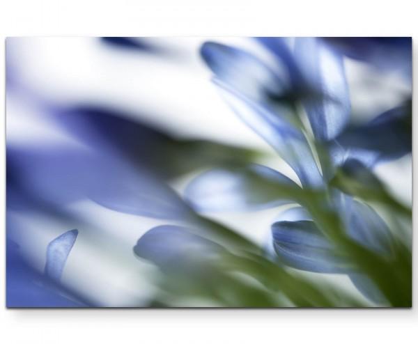 Naturaufnahme – blaue Blüten soft - Leinwandbild