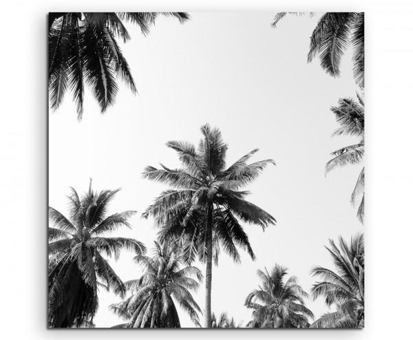 Naturfotografie – Kokospalmen mit Himmel auf Leinwand