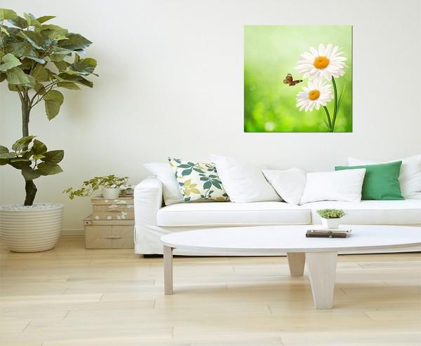 80x80cm Gänseblümchen Blume Schmetterling