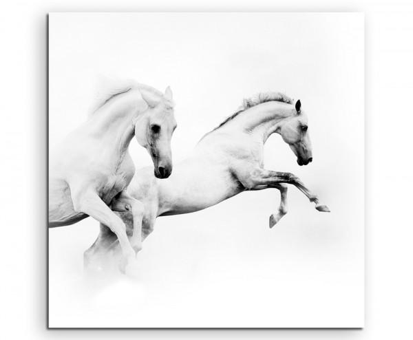 Künstlerische Fotografie – Zwei weiße Pferde auf Leinwand
