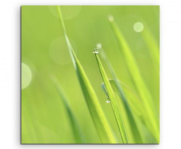 Naturfotografie – Frisches Gras im Morgentau auf Leinwand