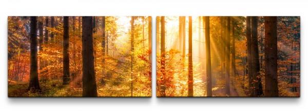 Sonnendurchfluteter Herbstwald Wandbild in verschiedenen Größen