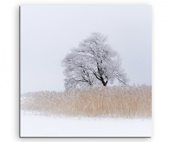 Landschaftsfotografie – Einsamer Baum am See auf Leinwand