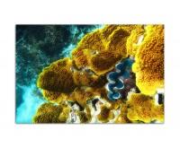 120x80cm Korallen Riff Unterwasser Ozean